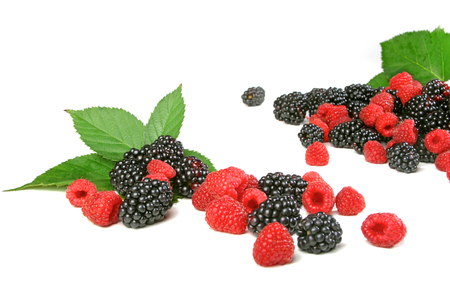 Berries on white backround - studio shot LANG_EVOIMAGES