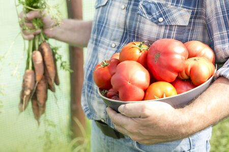 Midsection of farmer holding organic tomatoes and carrots at farm 写真素材