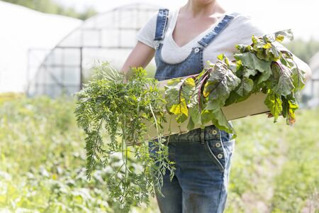 Midsection of mid adult woman holding vegetables in crate at farm