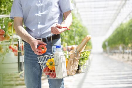 Midsection of man with basket buying organic tomatoes in greenhouse