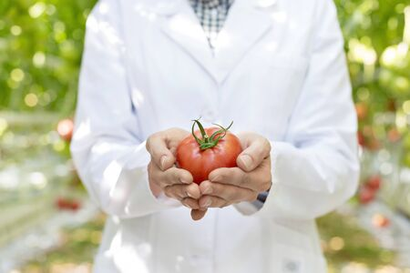 Midsection of scientist holding fresh organic tomato at greenhouse 写真素材