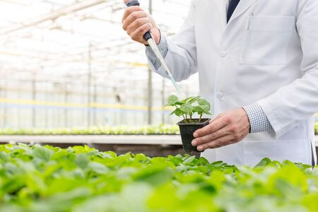 Midsection of male biochemist using pipette on seedling in plant nursery
