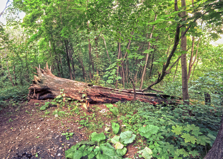 dense forest: Scenic Landscape of Dense Forest with wooden stump