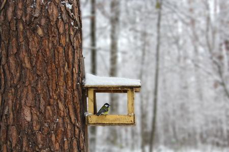 trough: Bird Tit on Trough. Winter Nature Landscape. Stock Photo