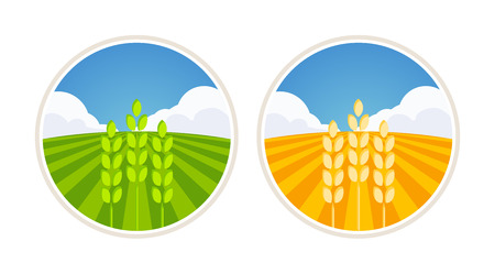 rolling landscape: Round Farm Label with Field of Barley and Wheat isolated on white, Vector Illustration