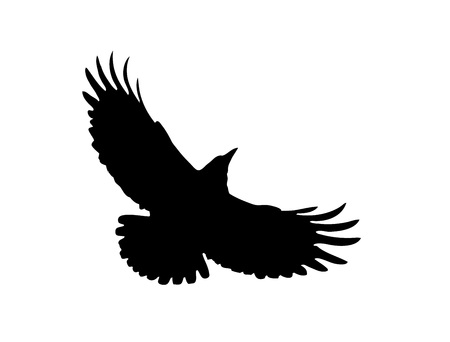 The Black Silhouette of a Rook. Flight of Dark Crow. Vector Illustration with Wild Bird with Wide-spread wings. Symbol of Freedom Illustration