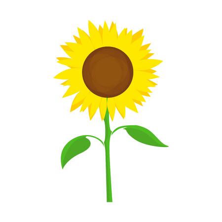 Sunflower - Symbol of Farm Harvest. Vector Flower illustration isolated on white background