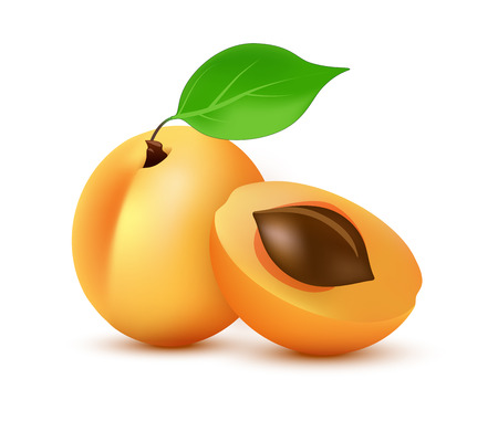 Apricot vector icon in realistic style. Icon illustration of orange summer juicy Fruit with leaf isolated on white background.