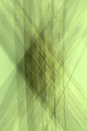 composure: Diverse compostezza di uno stelo del fiore, Ottobre 7, 2012 Archivio Fotografico