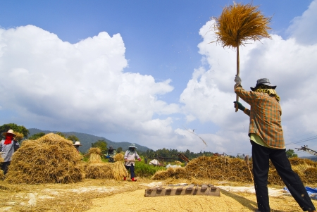 field of thai: Farmer life, northern of Thailand Stock Photo