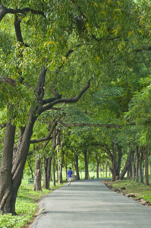 pedestrian walkway: Pedestrian walkway for exercise lined up with beautiful tall trees