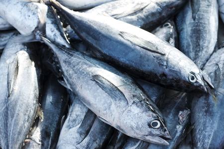 atun: Atún, bacoreta oriental, Thunnini, atún Longtail, el atún rojo del Norte
