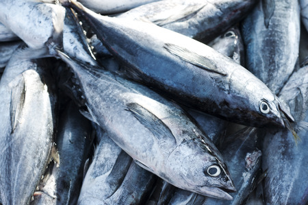 Tonijn, Oost kleine tonijn, Thunnini, Longtail tonijn, Noord blauwvintonijn