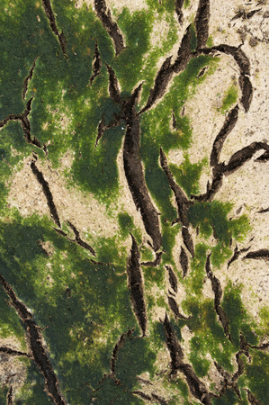 viewfinderchallenge3: Cattle manure dehydrated, Cracked soil fertilizer,