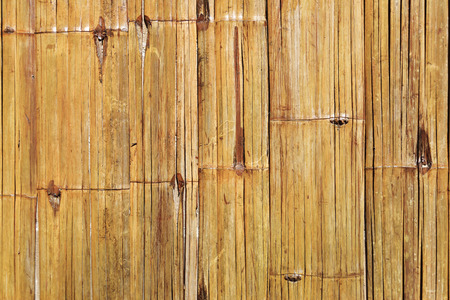 pine boughs: Bamboo wall background.