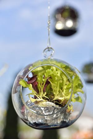 flowerpots: Hanging flowerpots glass with vegetables growing. Stock Photo