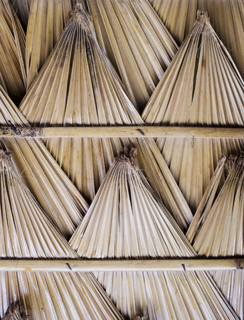 thatch: Primitive thatch of palm leaves.