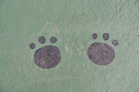 green footprint: An green cement path with animal footprint.