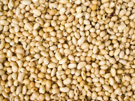 soak: Close up, Soy beans after soak.