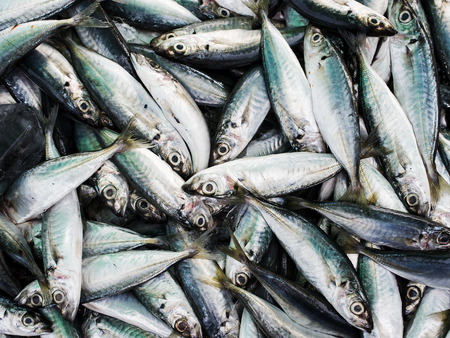fish meal: Fresh torpedo scad fishs in the market, Thailand. Stock Photo