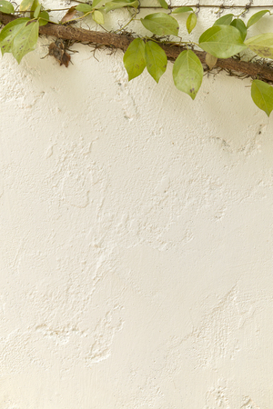 velcro: Velcro tree in climbing on white clay wall.