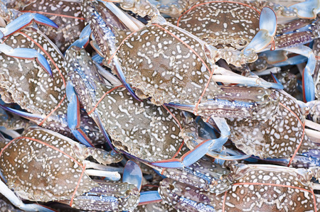 blue swimmer crab: Blue swimmer crab in the market. Stock Photo