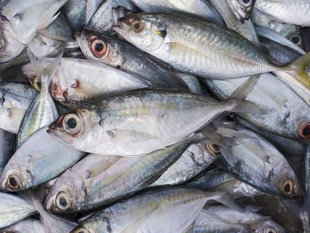 spat: Fresh Indian mackerel in the market. Stock Photo