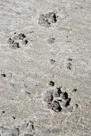 Three dog footprints on the grey concrete