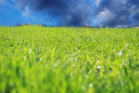 Field with green grass and deep blue cloudy sky. Shallow dof Stock Photo