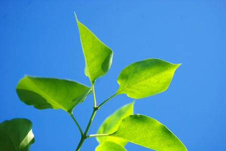 Close-up of fresh green leaves over blue sky background