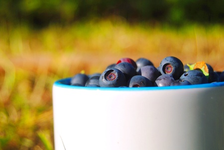 cip: Blueberries in the cup on the grass