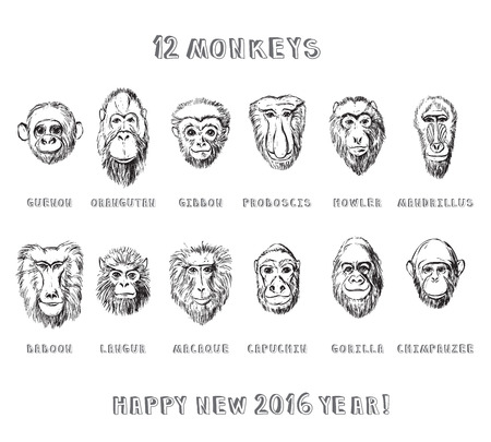 howler: Collection of hand drawn monkeys in sketchy style Illustration