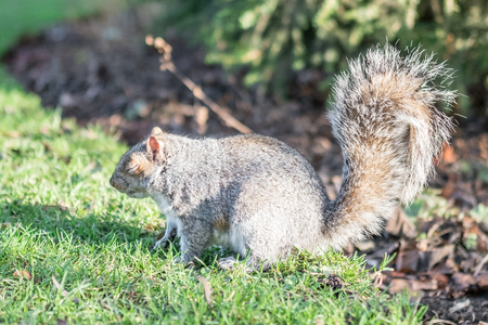 Close up of Squirrel in the park