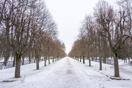 Row of Trees at Peterhof Palace in St. Petersburg, Russia. In winter.