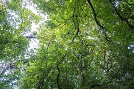 Green leaves, branches against blue sky 版權商用圖片