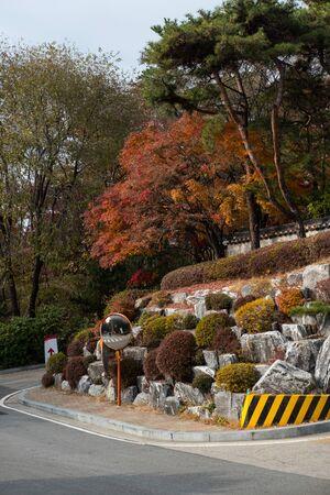 Colorful Red and Orange leaves, autumn season with traditional Korean wall on the background. Korea University, Seoul, South Korea Stock fotó