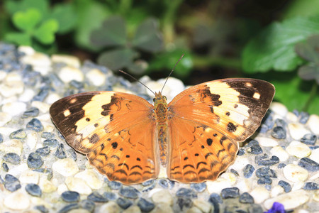 Rustic butterfly,a beautiful rustic butterfly on the stone ground in garden photo