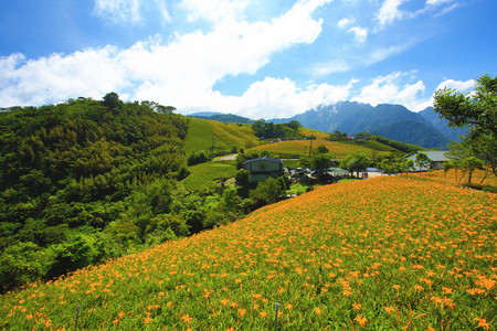 Beautiful scenery of daylily flowers with mountains in a sunny day Stock Photo - 85581129