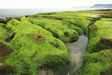 Tide ditch, Stone trench with green seaweed at seaside in spring