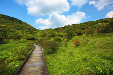 Beautiful mountain scenery with wooden path and forest, a wooden path among the mountains