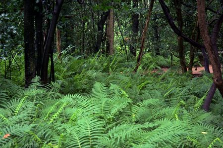 A forest floor covered in lush ferns
