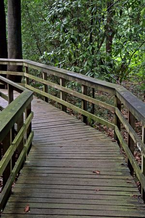 A wood pathway going into the forest photo