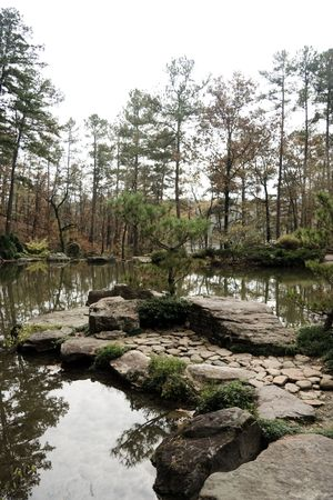 A tranquil pond and pine tree alone in the woods Stock Photo - 5501012