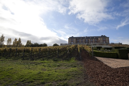 A vineyard estate with grape vines in the foreground