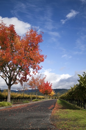 A vineyard and autumn colored trees around a road Stock Photo