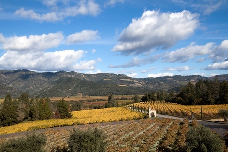 The hillsides of Napa Valley wine country Stock Photo