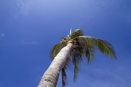 A palm tree blowing in the wind with a blue cloudy sky