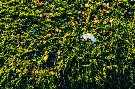 Seaweed treasure. Zdjęcie Seryjne