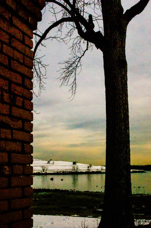 Trees and pillars. Stockfoto