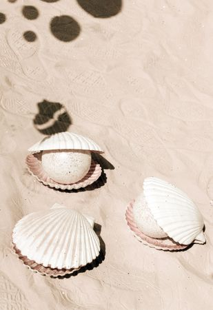 Shells and bubble shadows on the sand. Sepia tone. Space for copy. Vacation and sea concept. Stock Photo